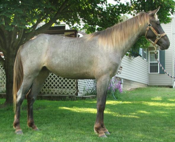 Silver Black Horse 24 Cool Hd Wallpaper