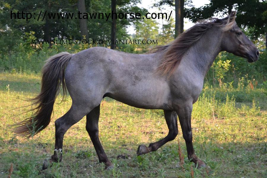 Silver Black Horse 38 High Resolution Wallpaper