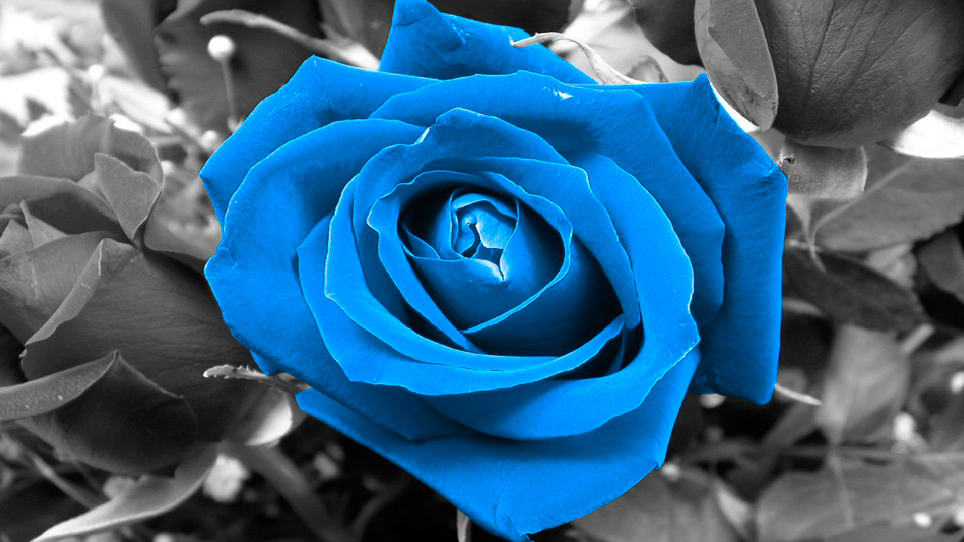 Black And Blue Colors Of Love 8 Wide Wallpaper ...