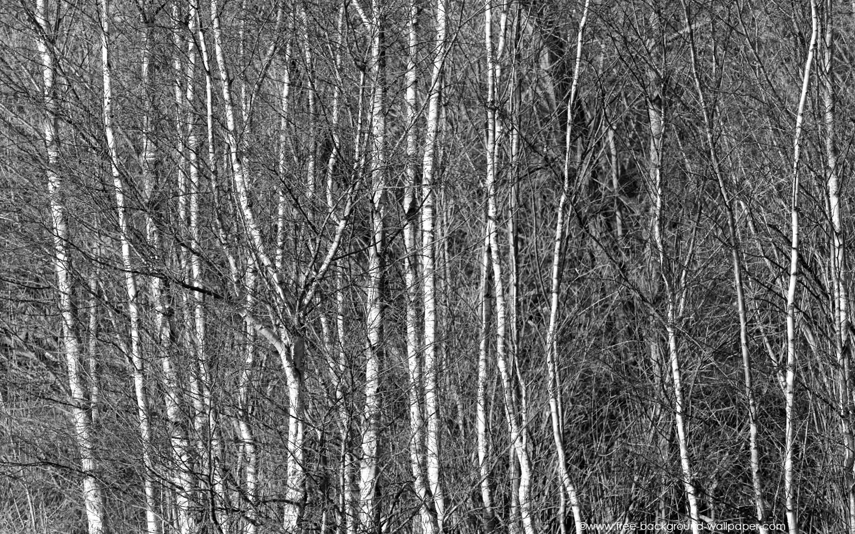 Black And Silver Wallpaper 13 Hd Wallpaper