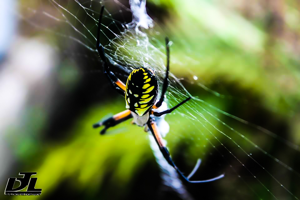 Black And Yellow Spider 15 Cool Hd Wallpaper ...