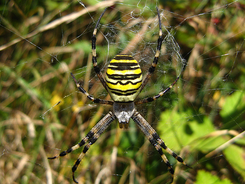 Black And Yellow Spider 21 Hd Wallpaper Hdblackwallpaper Com