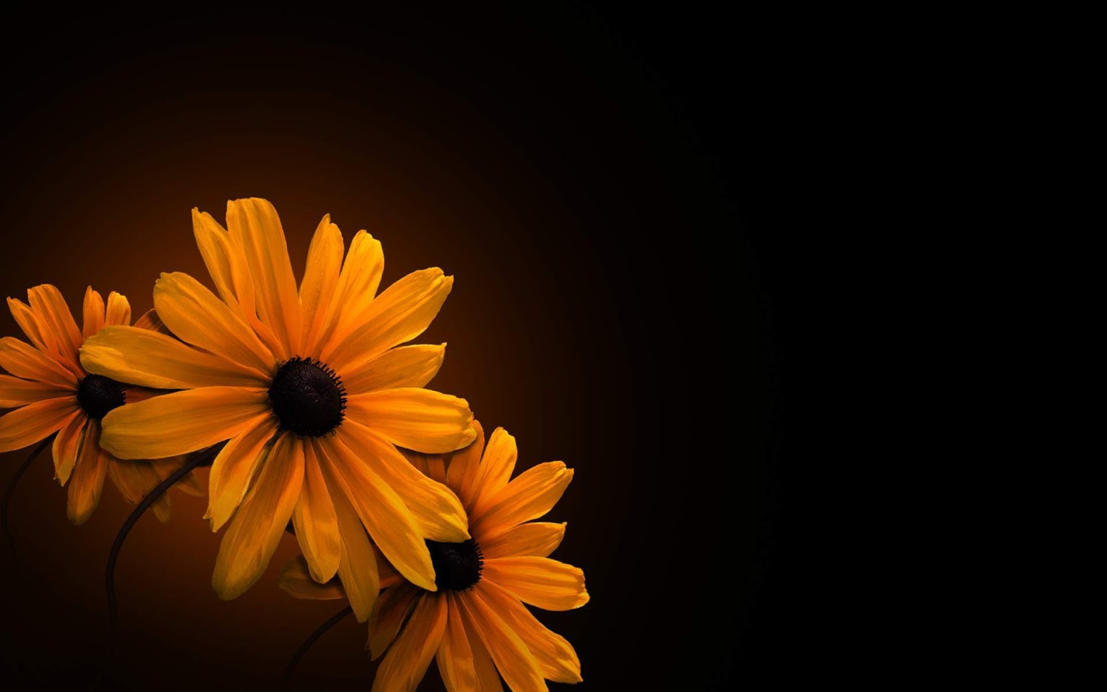 Floral Wallpaper With Black Background 8 Hd Wallpaper