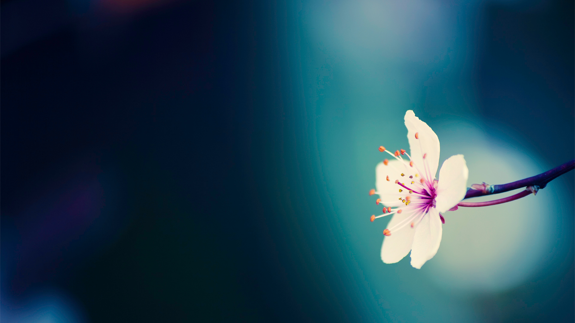 Floral Wallpaper With Black Background 38 High Resolution Wallpaper