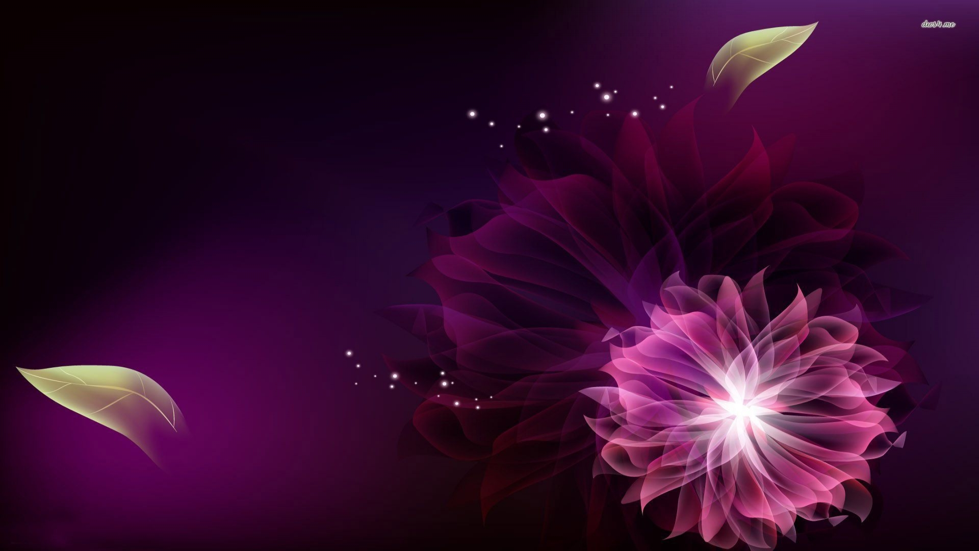 Floral Wallpaper With Black Background Free Hd Wallpaper