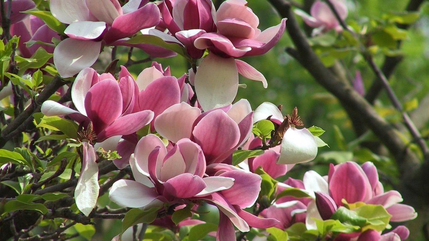 Spring Flowers Desktop Wallpaper Hd Flowers Healthy