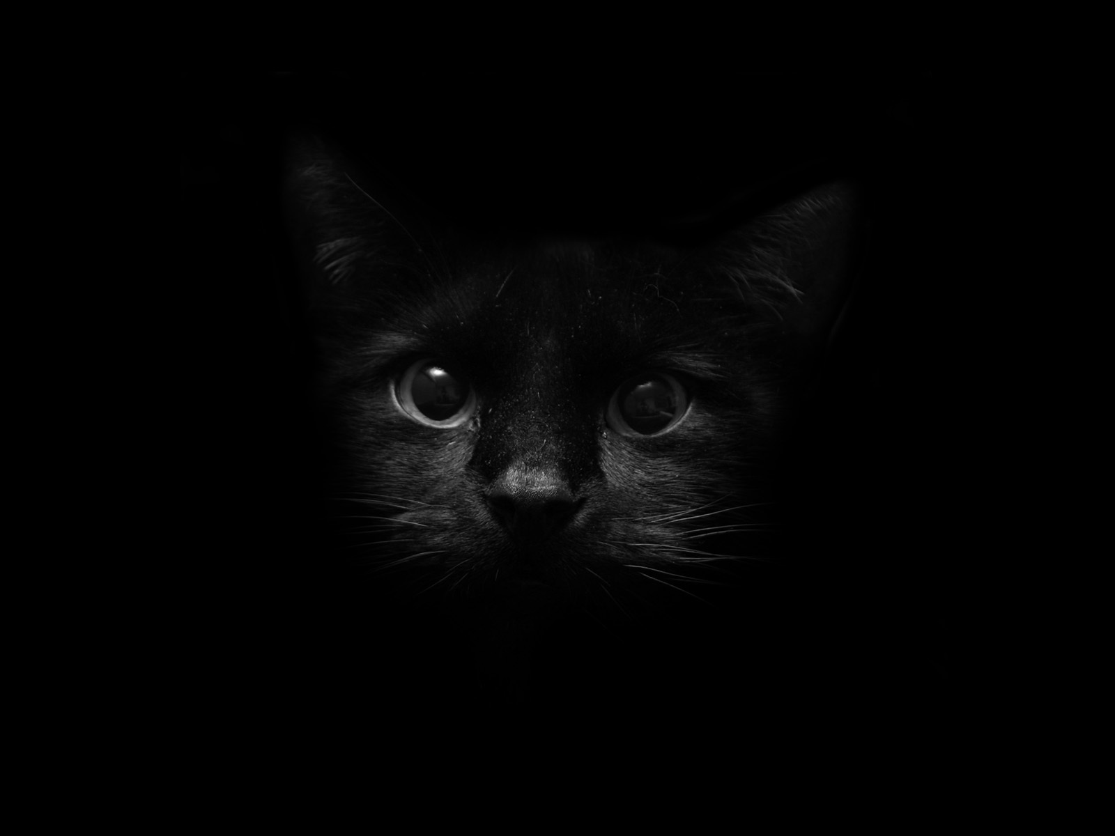 Black Cat 26 Wide Wallpaper