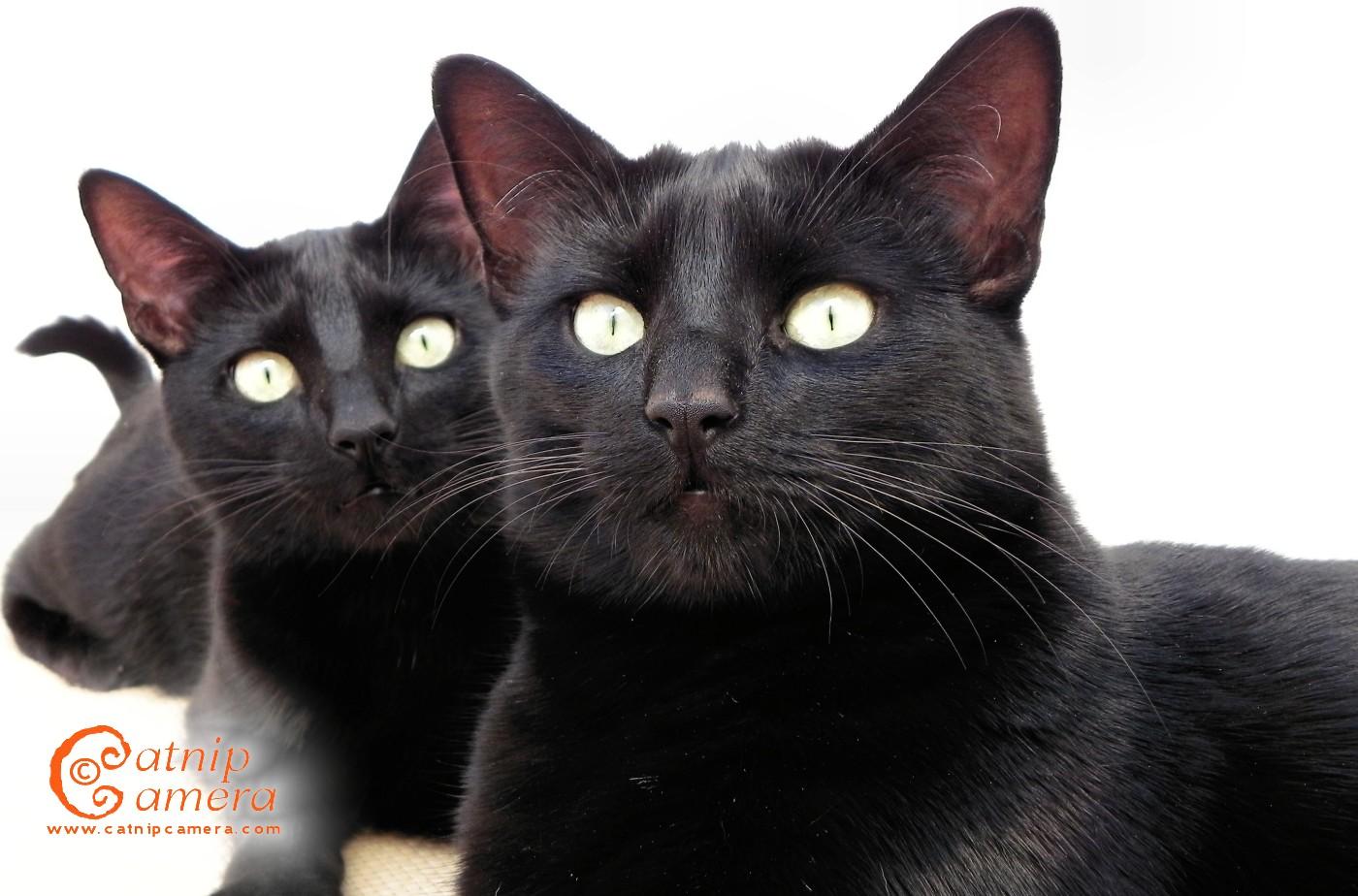 Black Cat 37 Desktop Background
