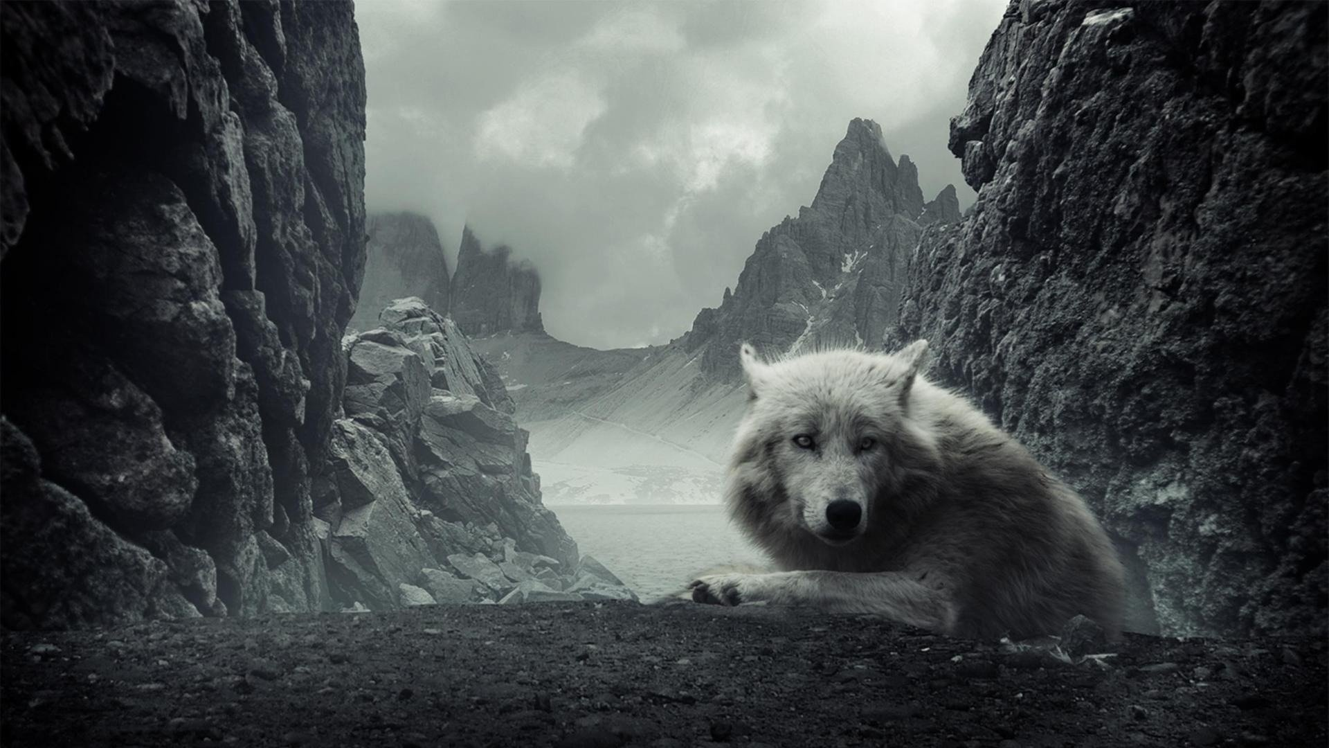 wallpapers background amazing cool hd awesome backgrounds wolf dark wolves hdblackwallpaper