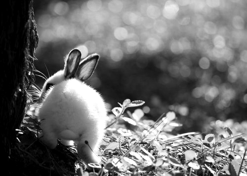 Animals Black And White 16 Background Wallpaper