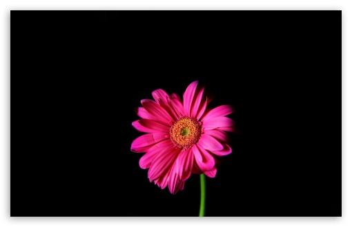 Hot Pink Wallpaper 5 Background - Hdblackwallpaper.com