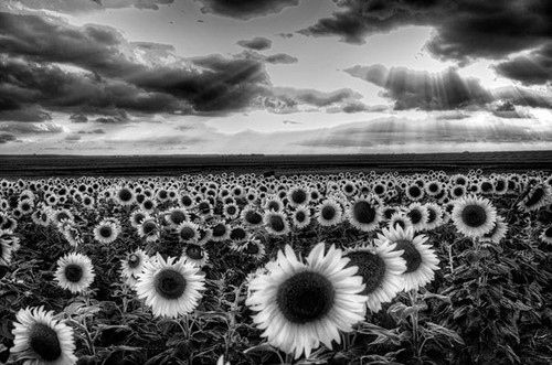 Black and white landscape photography 10 cool hd wallpaper