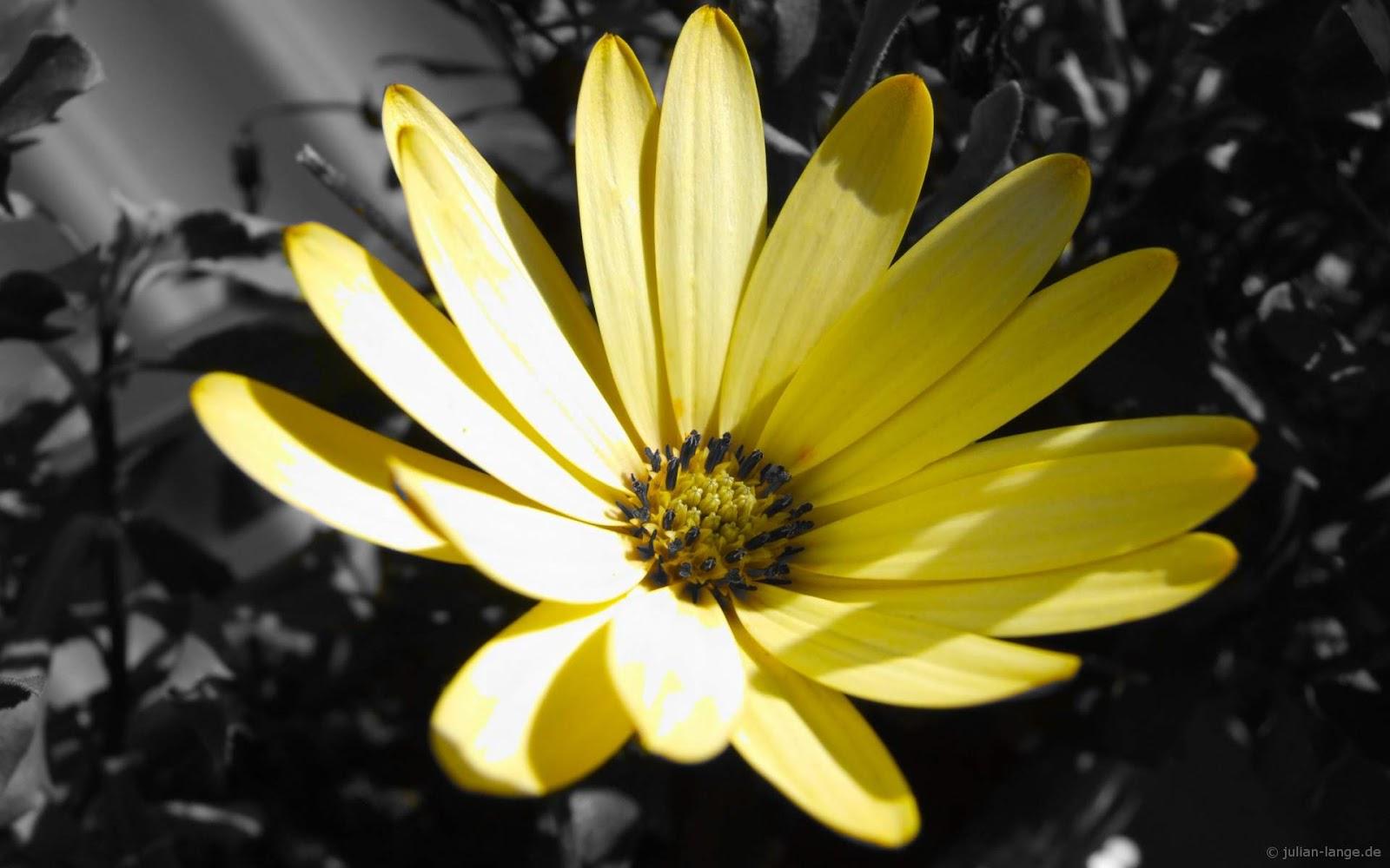 Black And Yellow Wallpaper 3 Desktop Background ... Yellow Black Flowers Wallpaper