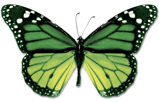 Green And Black Butterfly  40 Cool Hd Wallpaper