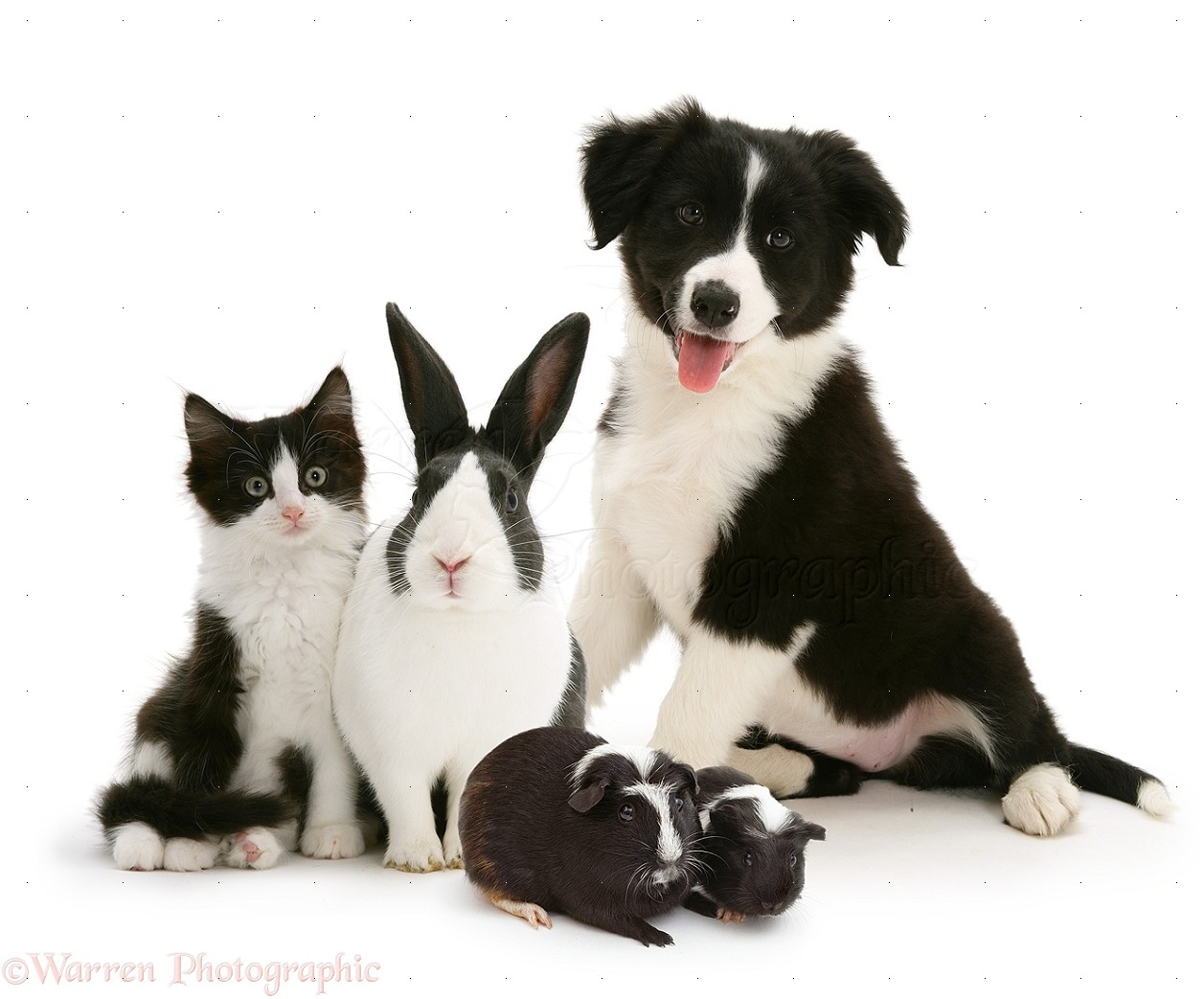 Black And White Images Of Animals 3 Background ...