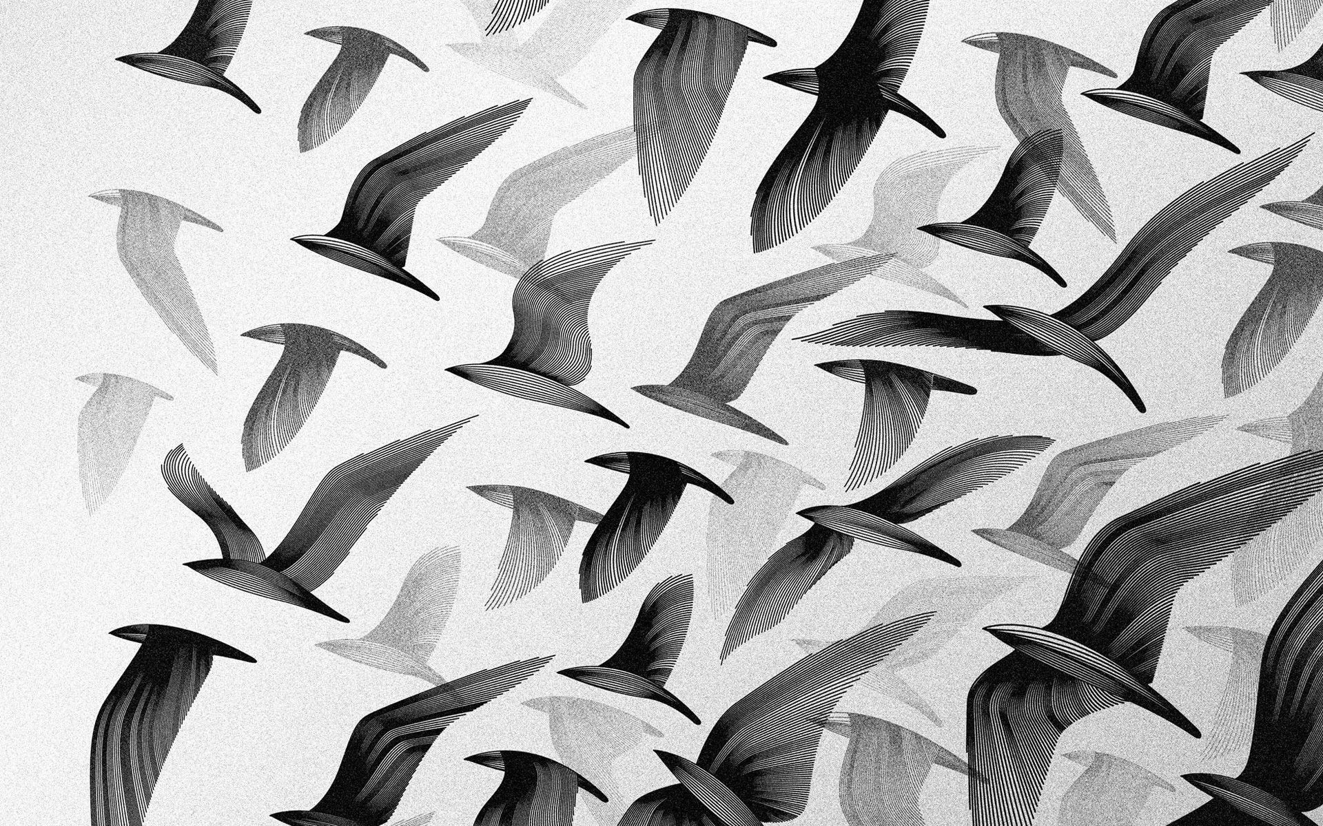 Cool Wallpaper High Resolution Black And White - black-and-white-images-of-birds-1-high-resolution-wallpaper  Gallery_153958.jpg