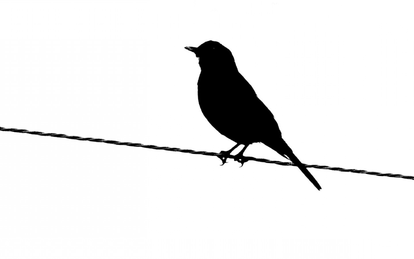black and white images of birds 24 high resolution love birds clip art image love bird clip art borders