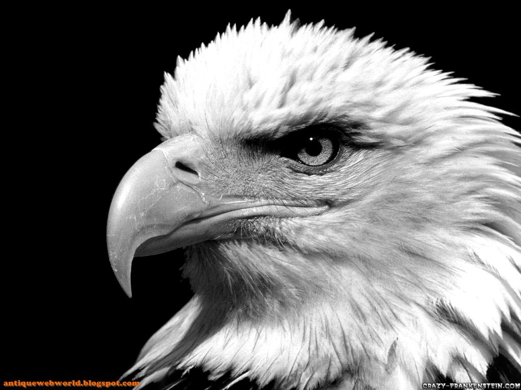 Black And White Images Of Birds  31 Background Wallpaper