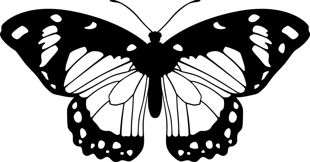 Black And White Images Of Butterflies 32 Free Wallpaper