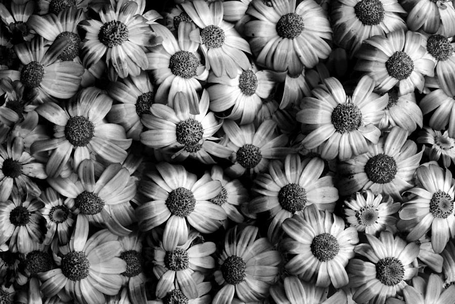 Black and white images of flowers 18 desktop wallpaper black and white images of flowers 5 cool hd wallpaper black and white images of flowers 5 cool hd wallpaper mightylinksfo