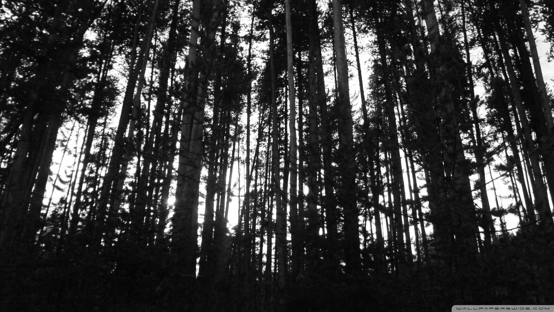 Black And White Trees 26 Free Wallpaper