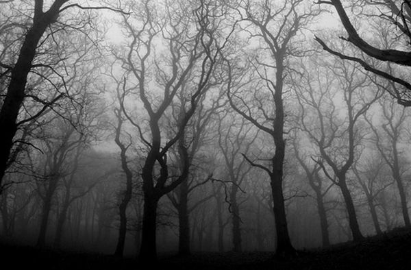 Black and white images of trees 23 desktop wallpaper