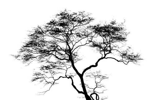 black and white images of trees 35 wide wallpaper. Black Bedroom Furniture Sets. Home Design Ideas