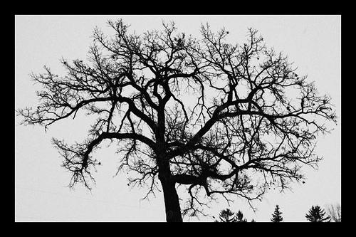 Black and white damask wallpaper 23 background hdblackwallpaper com - Black And White Images Of Trees 38 Desktop Wallpaper