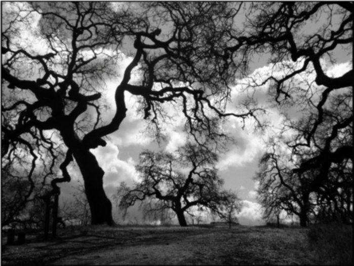 black and white images of trees 17 background wallpaper. Black Bedroom Furniture Sets. Home Design Ideas