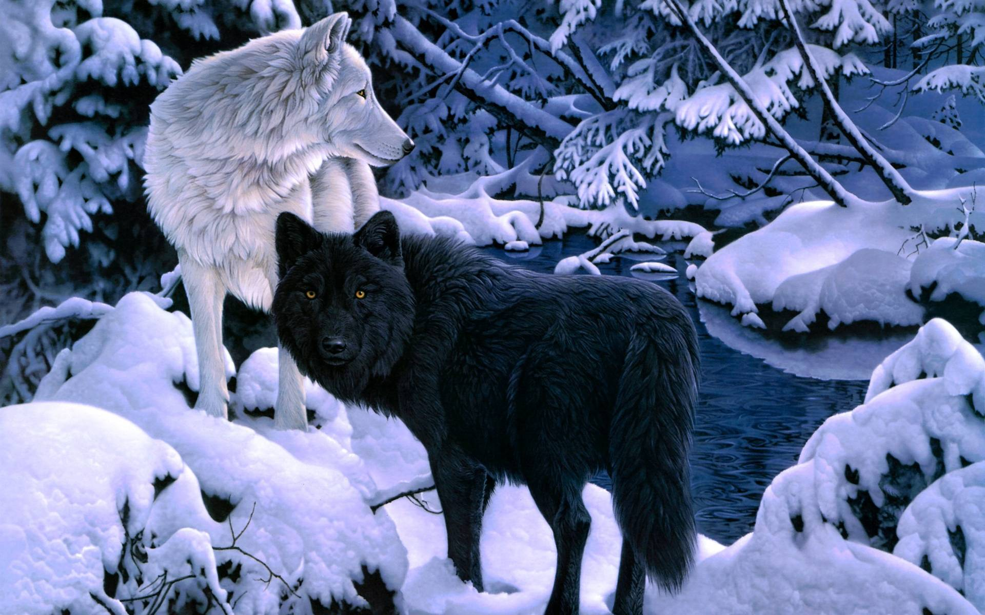 Cool white wolf wallpapers - photo#27