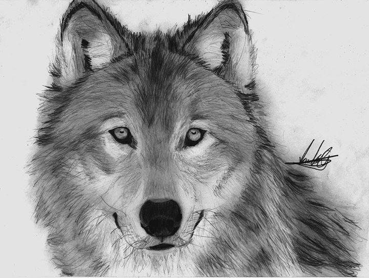Волки воющие картинки 5