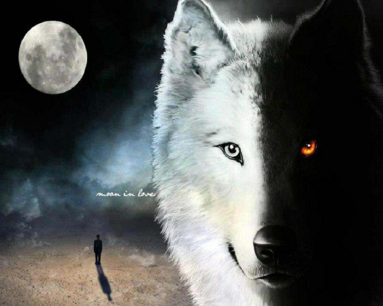 black and white wolf 31 background wallpaper - hdblackwallpaper