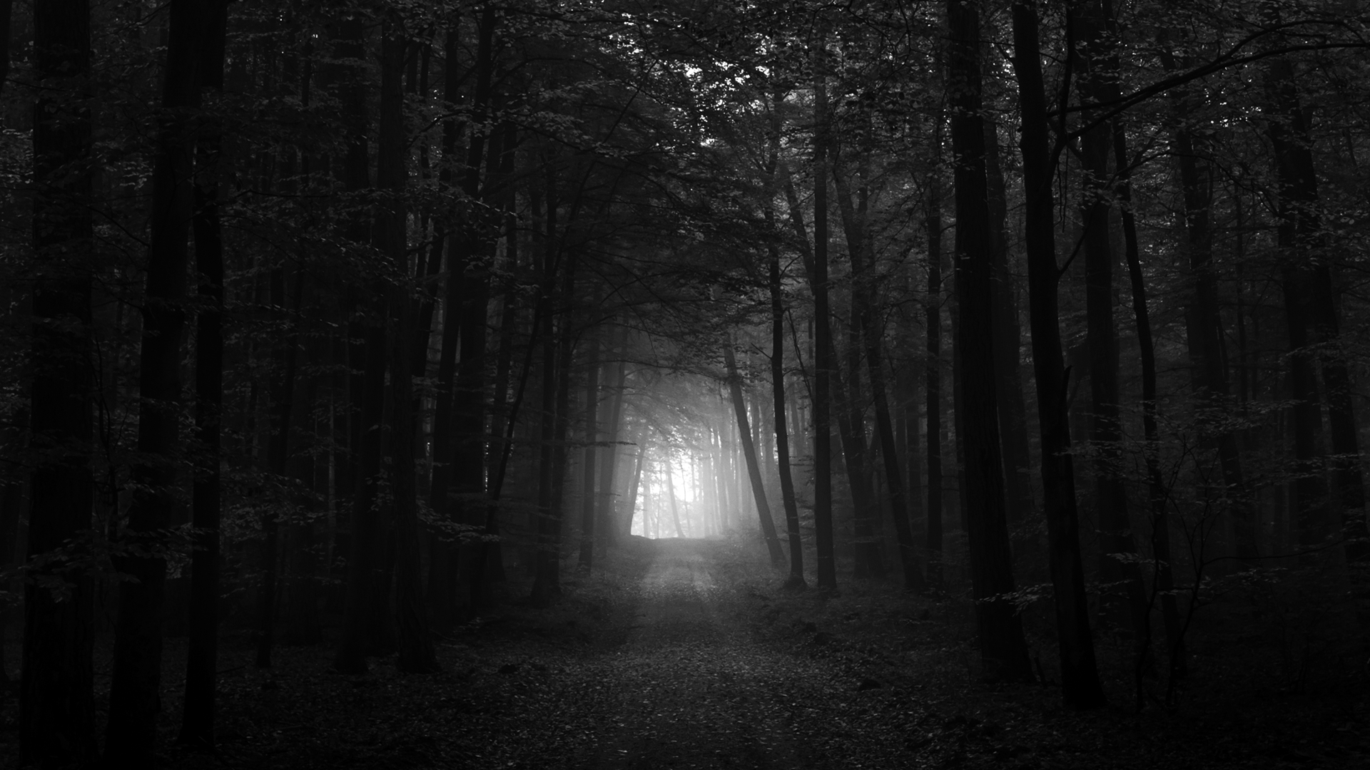 Black And White Pictures Anime Forest  15 Wide Wallpaper