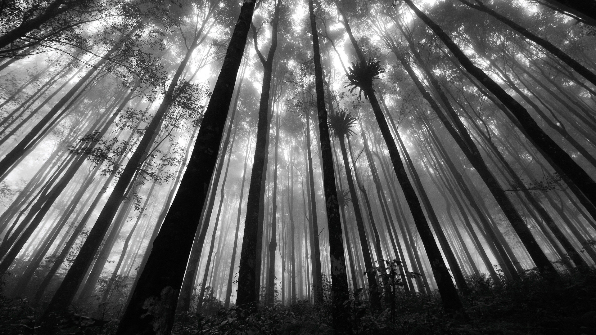 Black and white pictures anime forest 3 wide wallpaper - Black and white anime wallpaper ...