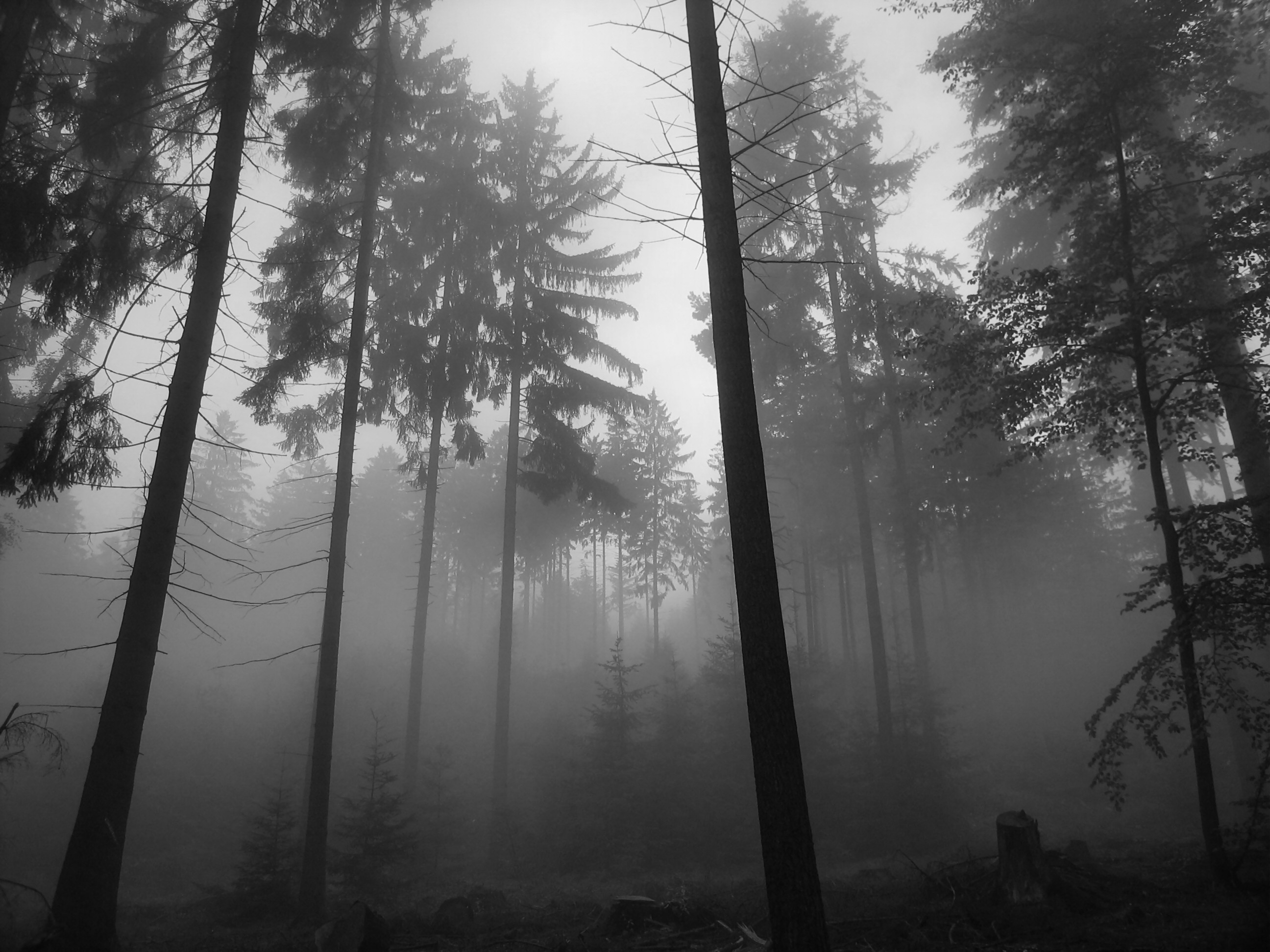 Must see Wallpaper Aesthetic Black And White - black-and-white-pictures-anime-forest-8-background  2018_651290      .jpg