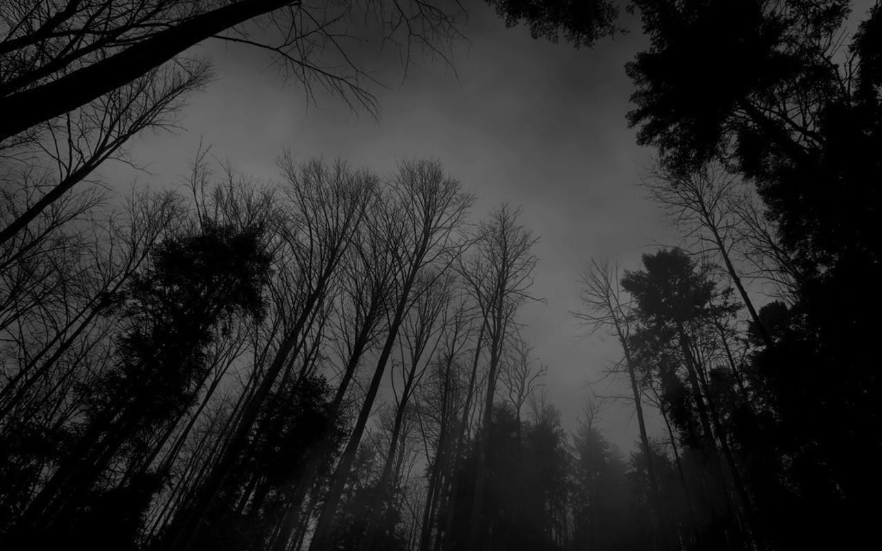 black and white pictures anime forest 29 hd wallpaper