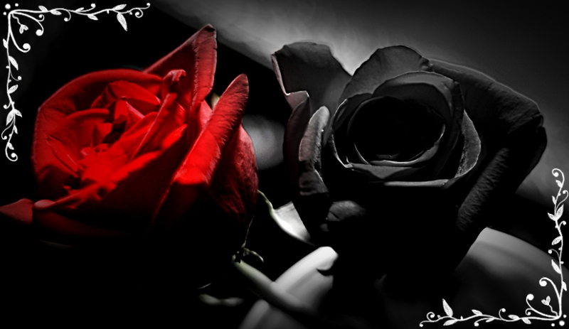 Red and black rose wallpapers 9 widescreen wallpaper red and black rose wallpapers 9 widescreen wallpaper voltagebd Images