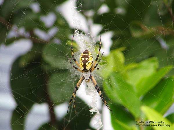 Black And Yellow Spider 53 Cool Wallpaper ...