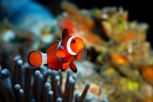 cute fish wallpaper - photo #20