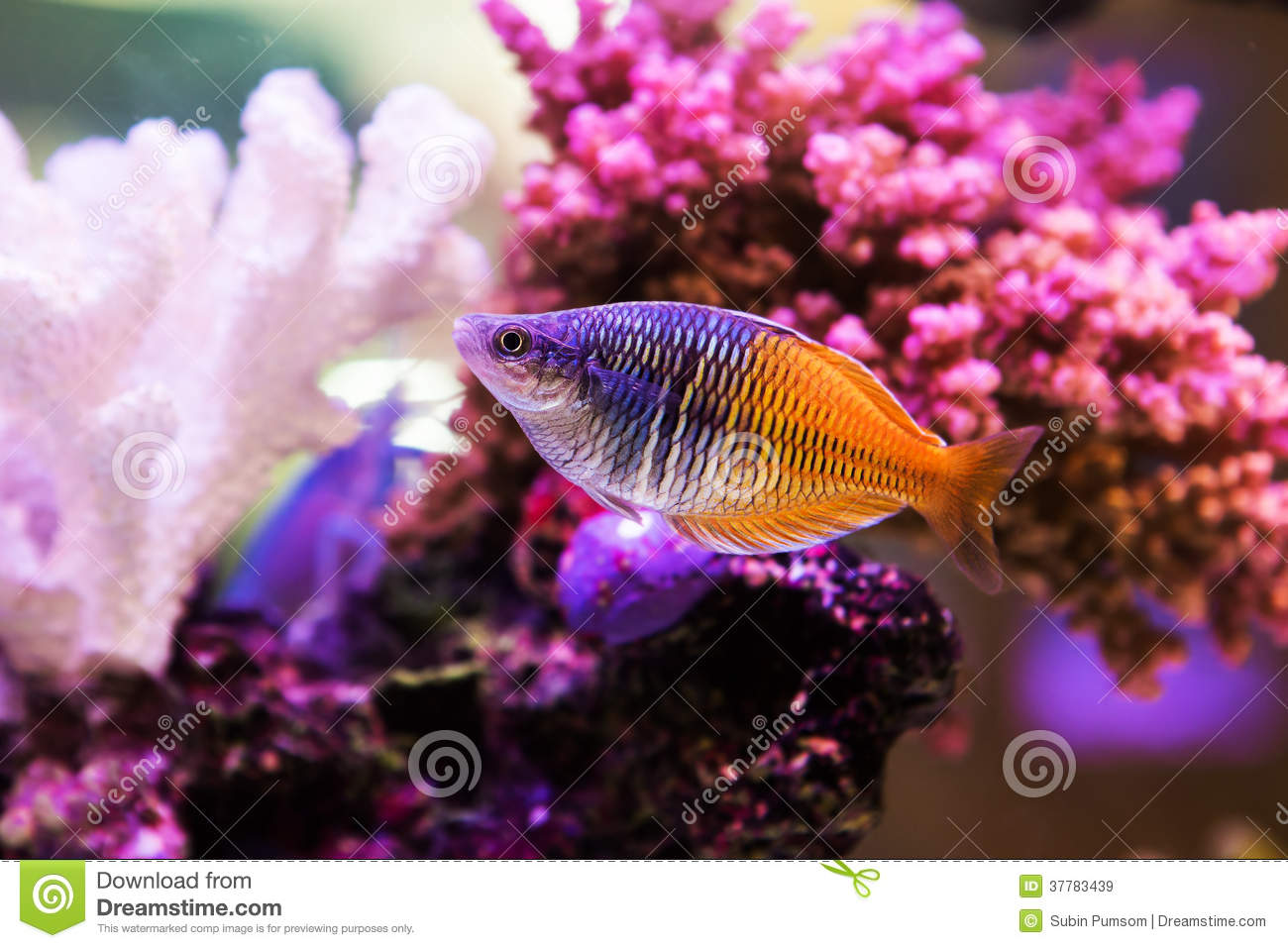 Cute fish 4 hd wallpaper for Cute freshwater fish