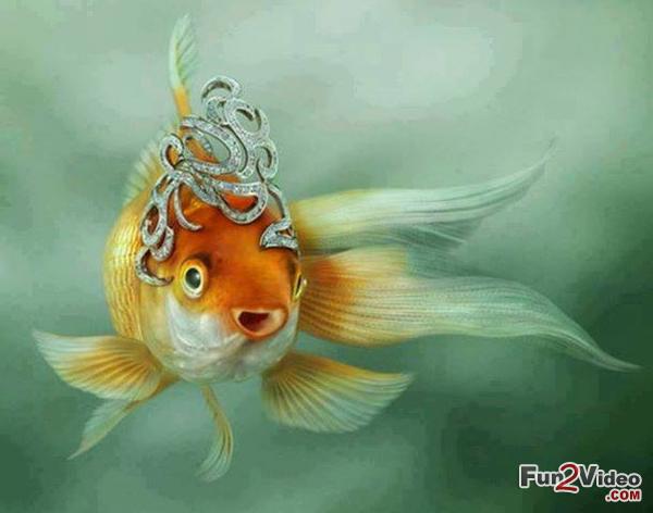cute fish wallpaper - photo #34