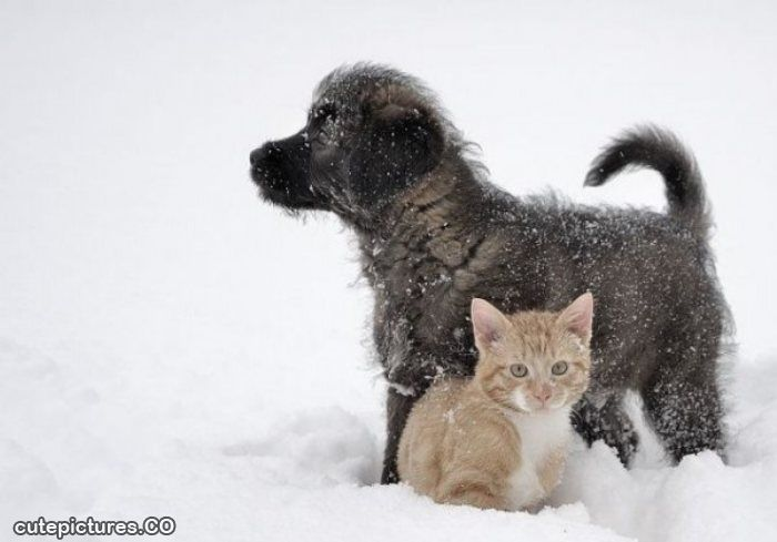 Cute Puppy And Kitten Pictures 1 Widescreen Wallpaper