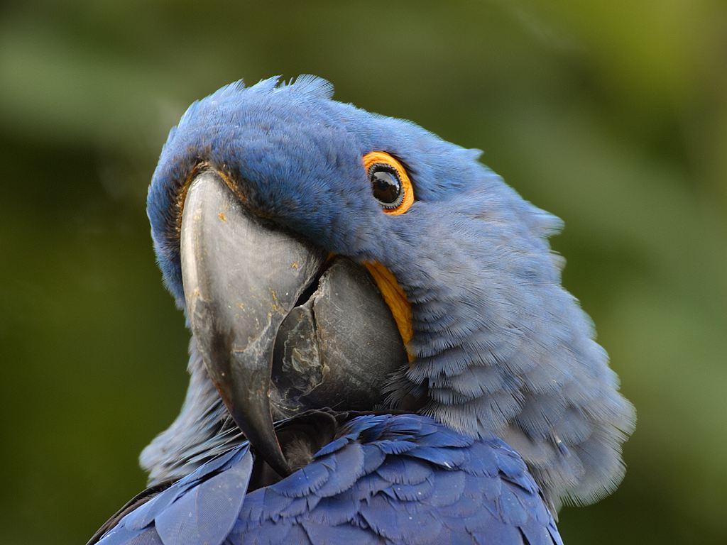 Parrot 16 Wide Wallpaper