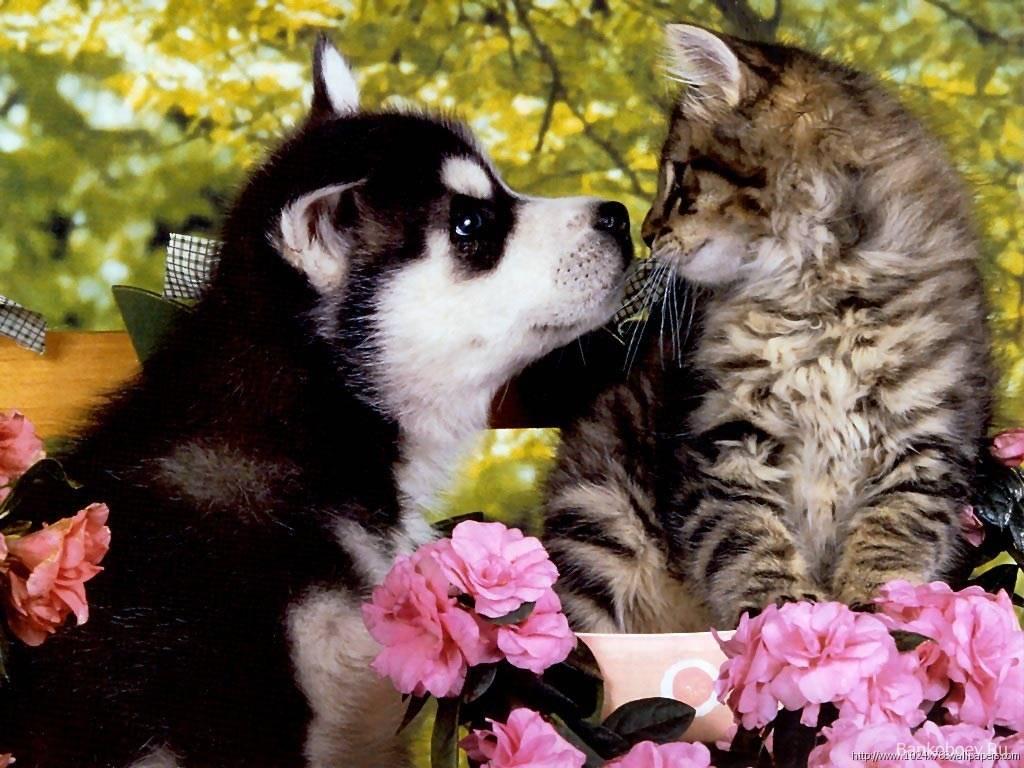Puppy Kitten 1 Background