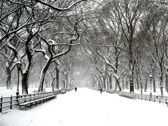 Black Winter 15 Widescreen Wallpaper