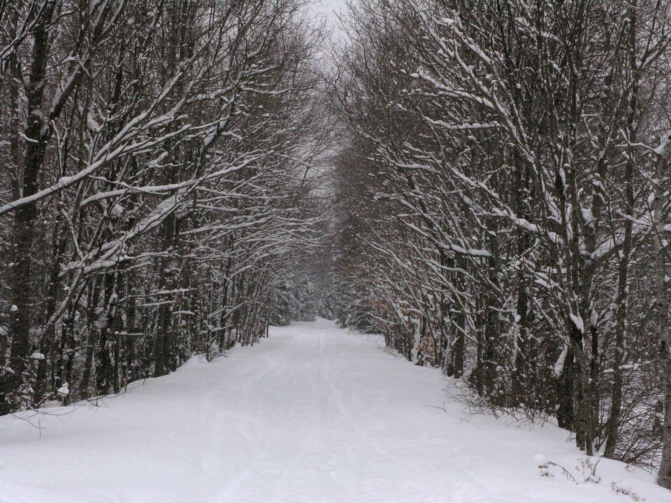 Black Winter 5 Background