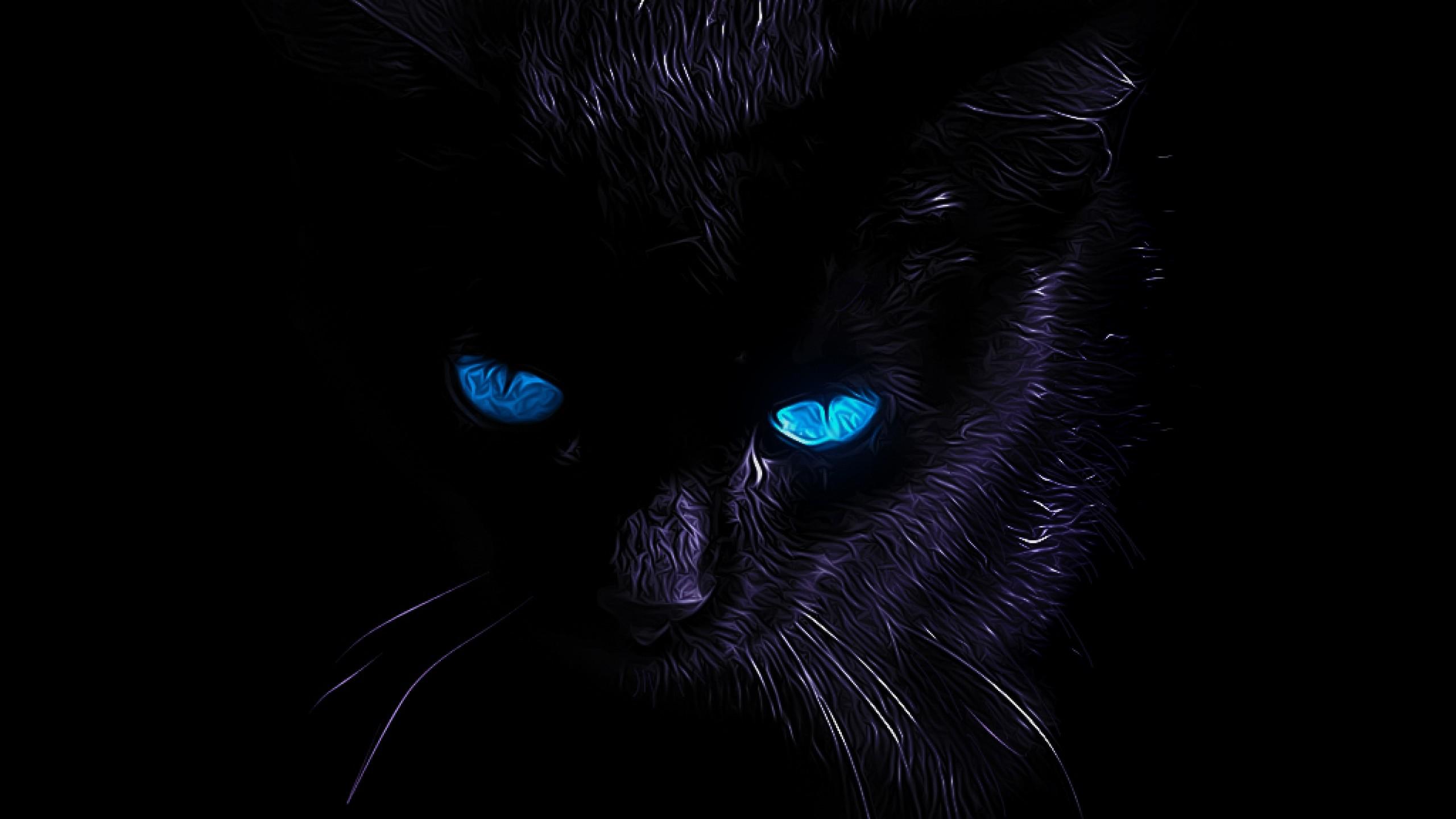 black cat 36 hd wallpaper