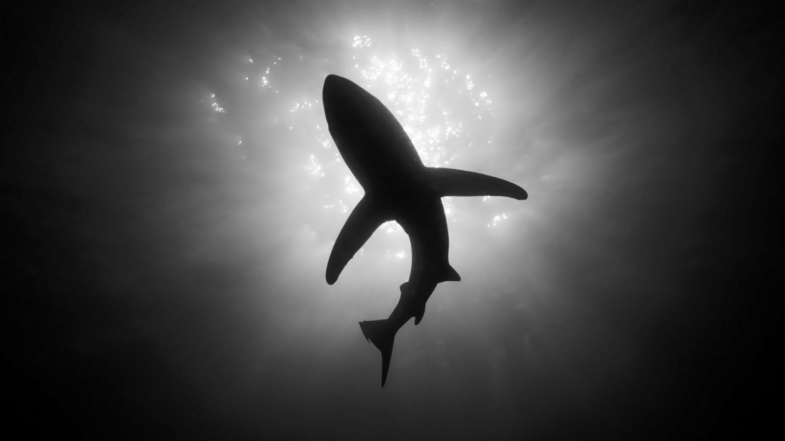 8000 Wallpaper Hd Black Shark 2 HD