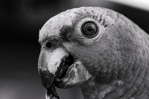 Black And White Images Of Animals 8 Background Wallpaper