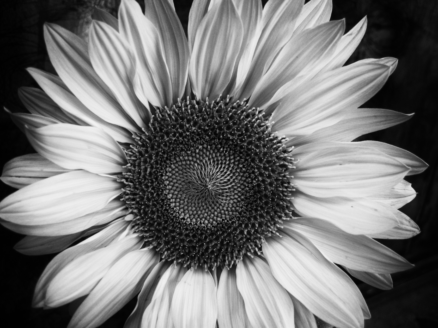 Black And White Images Of Flowers 11 Desktop Wallpaper ...